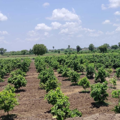 agroforestry-method-placation-thumnail